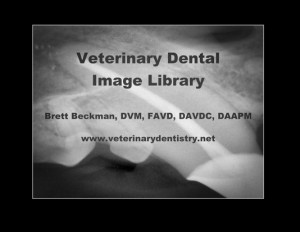 1 1 300x232 Veterinary Dental Radiography Positioning Guide   Dogs & Cats X ray Book