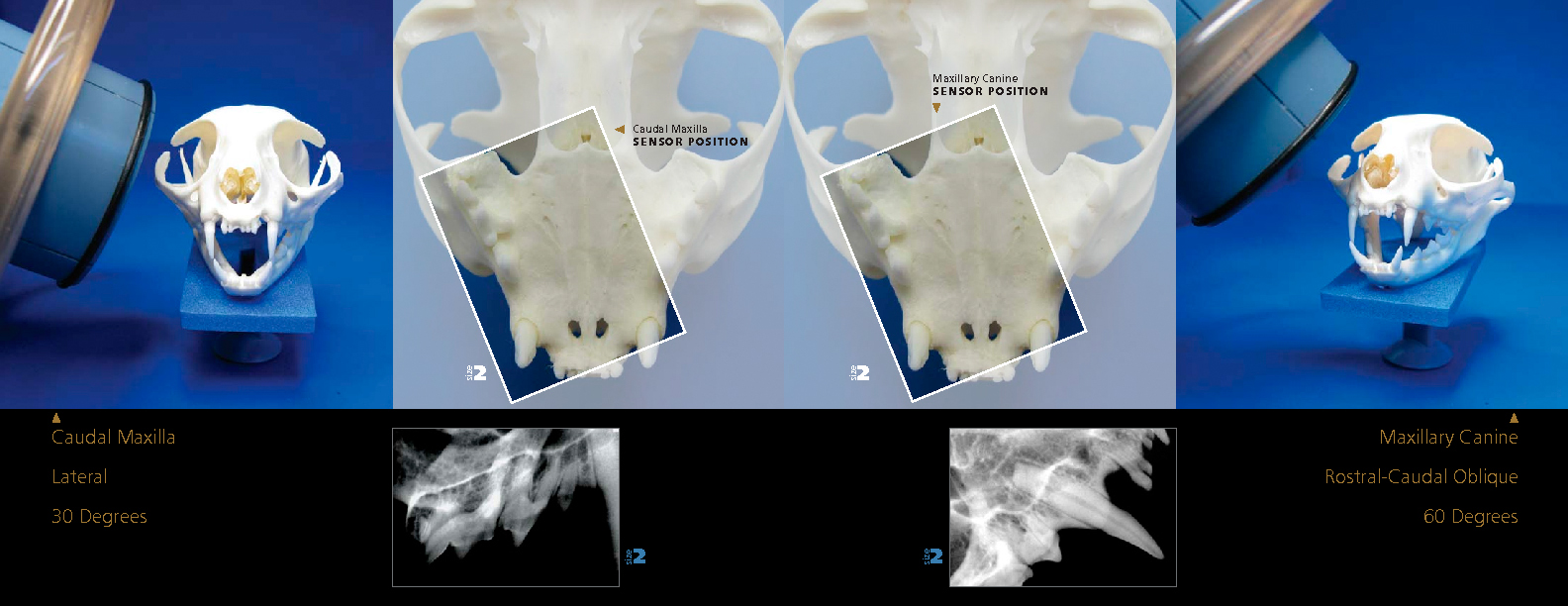 veterinary dentistry staff and client education image library rh veterinarydentistry net Radiography Positioning Aids Velpeau X-ray Positioning