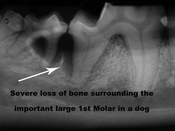 Cat and Dog Teeth Cleaning - Comprehensive Oral Health ...