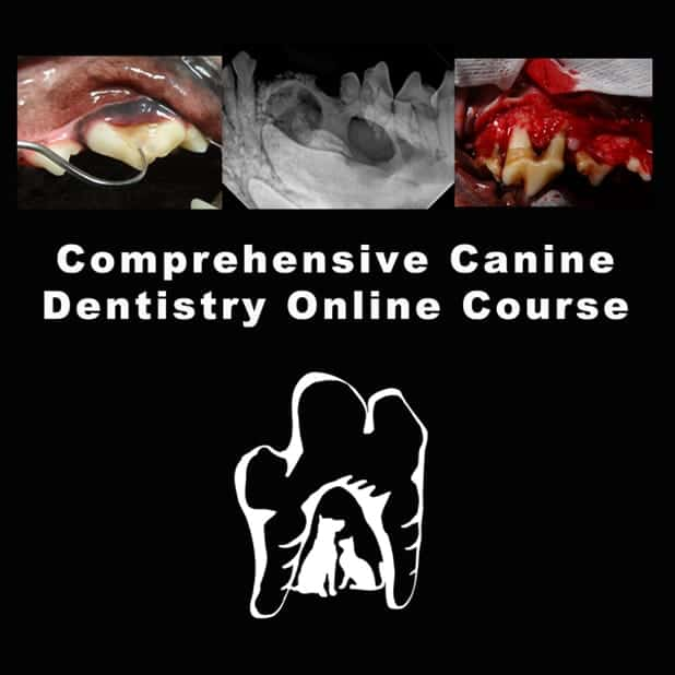 veterinary dentistry ce course