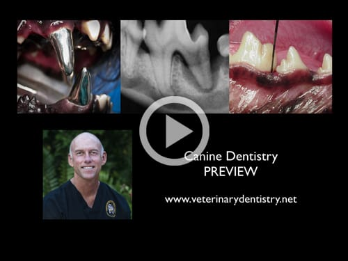 Canine Dentistry Webinar On Demand Online Course - Veterinary Dental Webinars On Demand