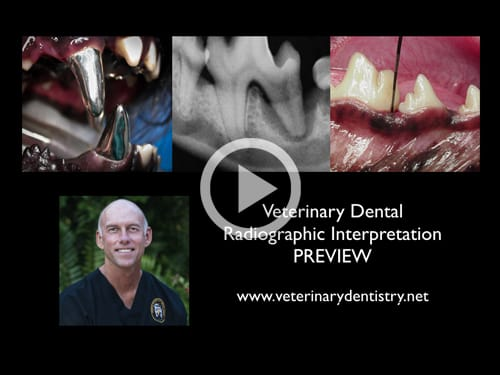 Veterinary Dental Radiographic Interpretation Webinar Online Course