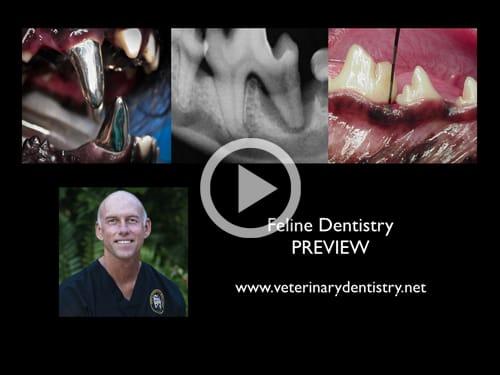 Feline Dentistry Webinar Online Course - Vet Dentistry