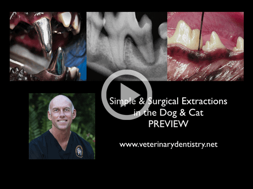 Veterinary Dentistry Extraction Webinar Online Course