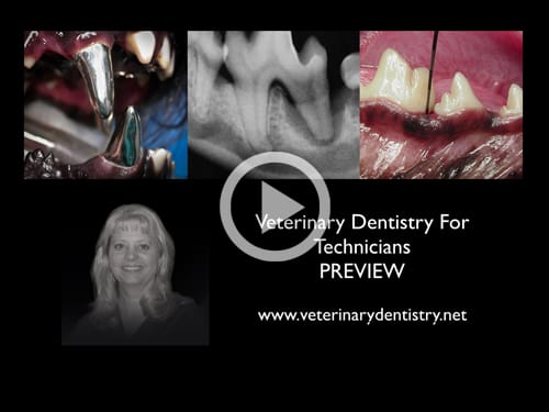 Veterinary Dentistry For Technicians Webinar Online Course