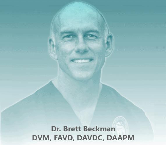 The image of Dr. Brett Beckman, DVM, FAVD, DAVDC, DAAPM, board-certified veterinary dentist