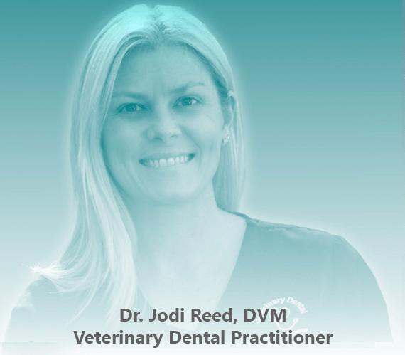 The image of Dr. Jodi Reed, DVM, Veterinary Dental Practitioner